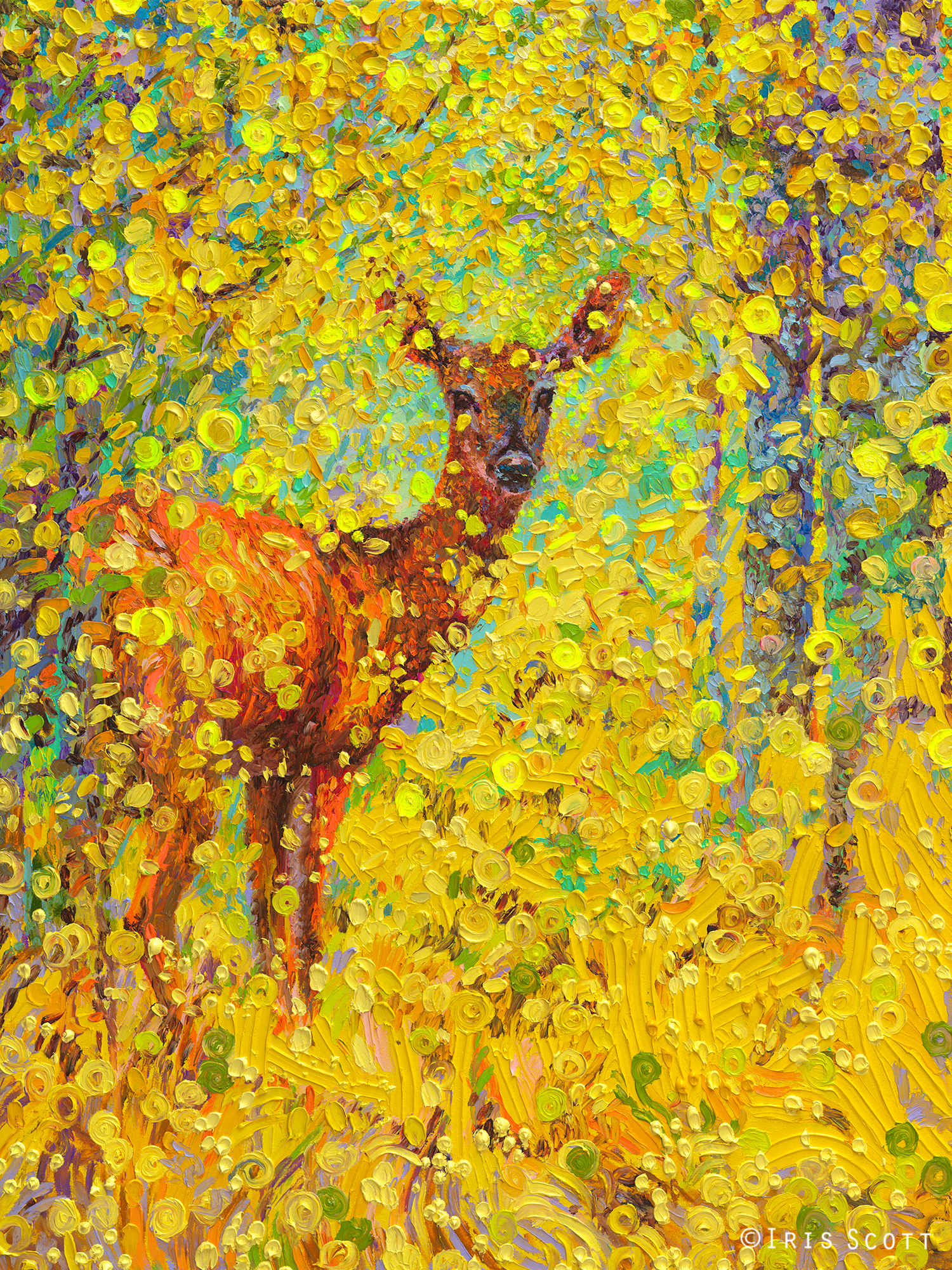 Whitetail Deer – Iris Scott