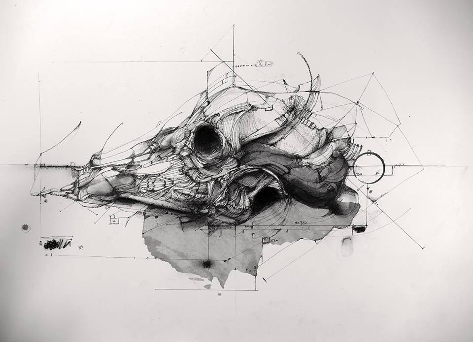 Crâne © Eric Lacombe