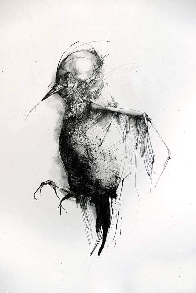 Oiseau © Eric Lacombe