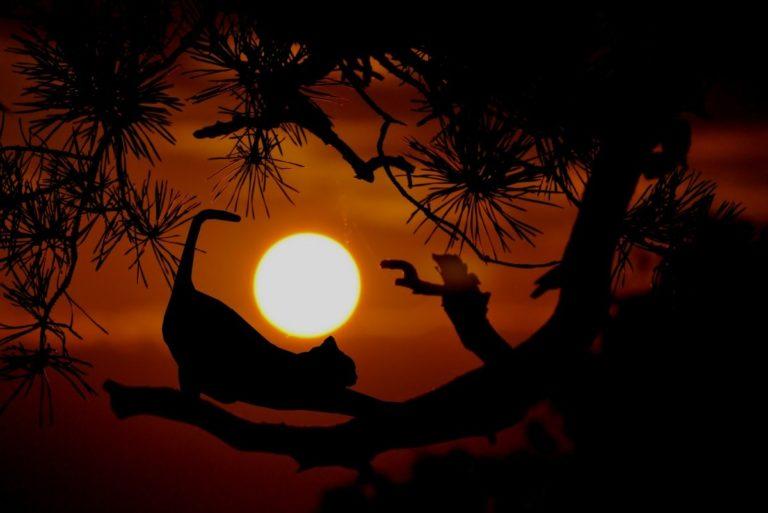 Chat au coucher de soleil